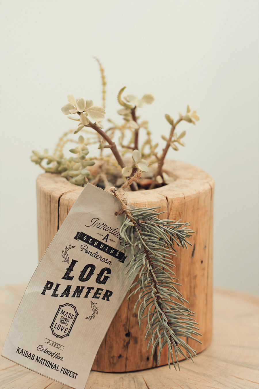 log planter by Jeff Hendrickson