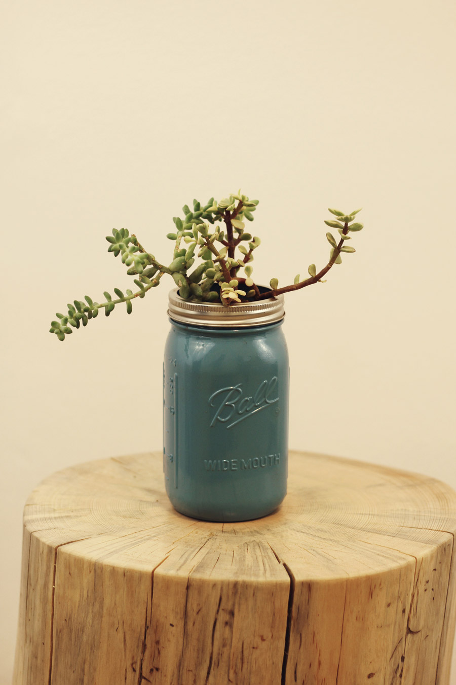 Mason jar succulent gift